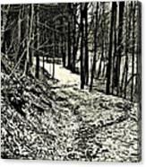 A Winter's Trail Canvas Print