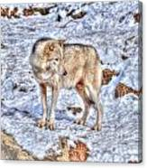A Wolf In Winter Canvas Print