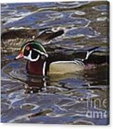 A Wood Duck Pair  Canvas Print