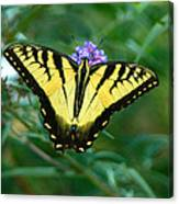 A Yellow Butterfly Canvas Print