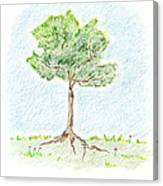 A Young Tree Canvas Print