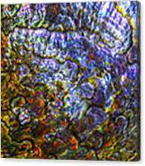 Abalone Shell 3 Canvas Print