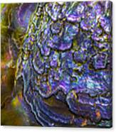 Abalone Shell 6 Canvas Print