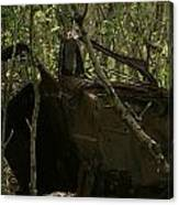 Abandoned Car In A Forest Canvas Print