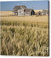 Abandoned Farmhouse In Wheat Field Canvas Print