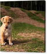 Abandoned Puppy Canvas Print