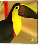 About A Beak  Canvas Print