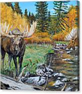 Above The Lake ..moose Canvas Print