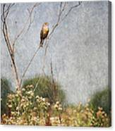 Above The Prairie II Canvas Print