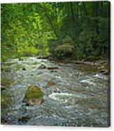 Abram's Creek Gsmnp Canvas Print