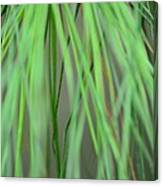 Abstract Green Pine Canvas Print