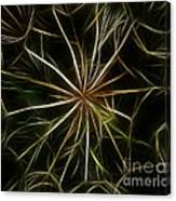 Abstract Of Nature 2 Canvas Print