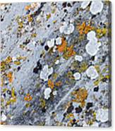 Abstract Orange Lichen 2 Canvas Print