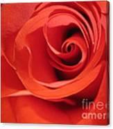 Abstract Orange Rose 9 Canvas Print