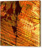 Abstract Wood Grain Canvas Print