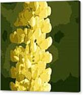 Abstract Yellow Lupine Canvas Print