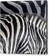 Abstract Zebra Canvas Print