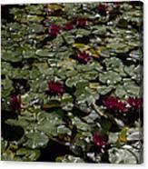 Abundance In Crimson  Canvas Print