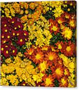 Abundance Of Yellows Reds And Oranges Canvas Print