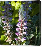 Acanthus Flower Canvas Print
