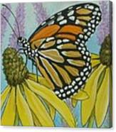 Aceo Monarch On Wild Grey Headed Coneflower Canvas Print