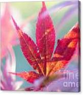 Acer Beautiful Fall Canvas Print