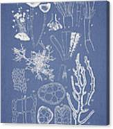 Acetabularia Caraibica And Chondria Intricata Canvas Print
