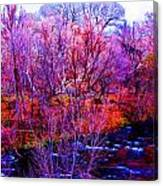Acid By The Creek Canvas Print