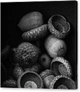 Acorns Black And White Canvas Print
