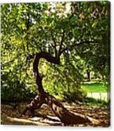 Acrobatic Tree Canvas Print