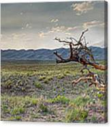Across A Great Wilderness Canvas Print