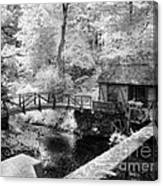 Across The Stream Canvas Print