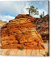 Adaptable Pinyon Pine Canvas Print