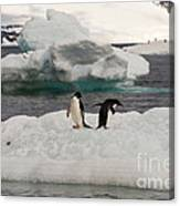 Adelie Penguins On Ice Canvas Print