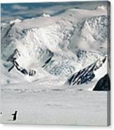 Adelie Penguins Trekking On The Ice Canvas Print