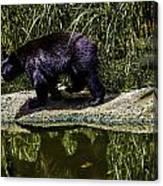 Adhd Bear Canvas Print