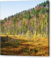 Adirondack Color Vi Canvas Print