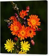 Adirondack Flowers Canvas Print