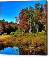 Adirondack Stream In Autumn Canvas Print