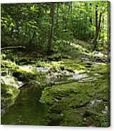 Adirondack Stream Canvas Print