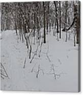 Adirondack Woods 3 Canvas Print