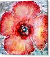 Adobe Poppy Canvas Print