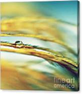 Adopt The Pace Of Nature- Feather Photograph Canvas Print
