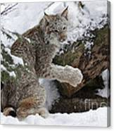 Adorable Baby Lynx In A Snowy Forest Canvas Print