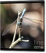 Adorable Dragonfly With Border Canvas Print