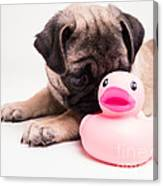 Adorable Pug Puppy With Pink Rubber Ducky Canvas Print