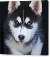 Adorable Siberian Husky Sled Dog Puppy Canvas Print