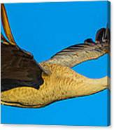 Adult Sandhill Crane Canvas Print