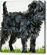 Affenpinscher Dog Canvas Print