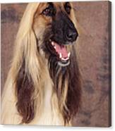 Afghan Hound Dog, Portrait Canvas Print
